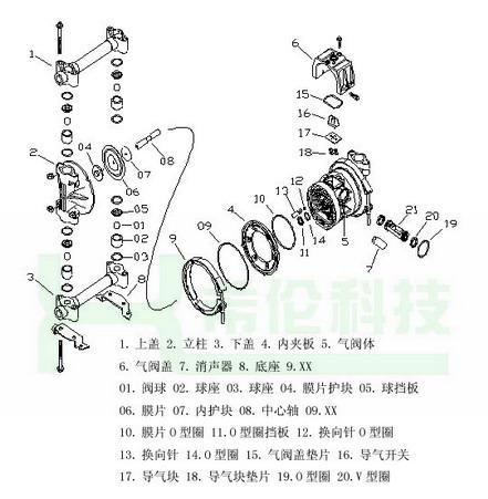 花生的结构图详细